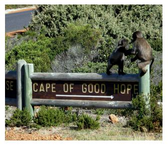 Full Day Tour Cape Peninsula and Cape of Good Hope