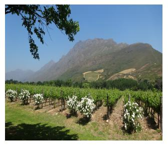 Cape Wineland Tour Image